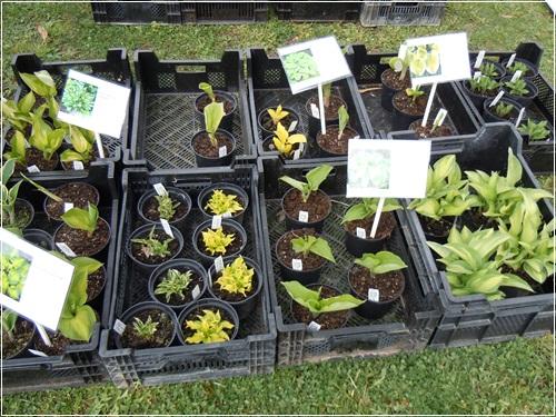 Minig rtchen 2011 teil 2 seite 77 gartengestaltung for Gartengestaltung chinesisch